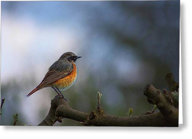 Common Redstart Greeting Card by Movie Poster Prints