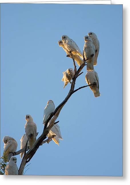 Roost Greeting Cards - Communa-Tree Greeting Card by Mike  Dawson