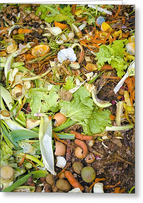 Mouldy Greeting Cards - Compost Heap Greeting Card by Veronique Leplat
