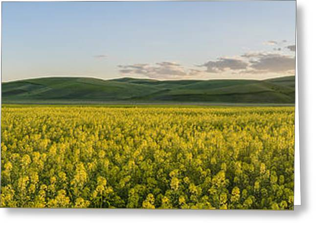 Original Photographs Greeting Cards - Concede the Day Greeting Card by Jon Glaser