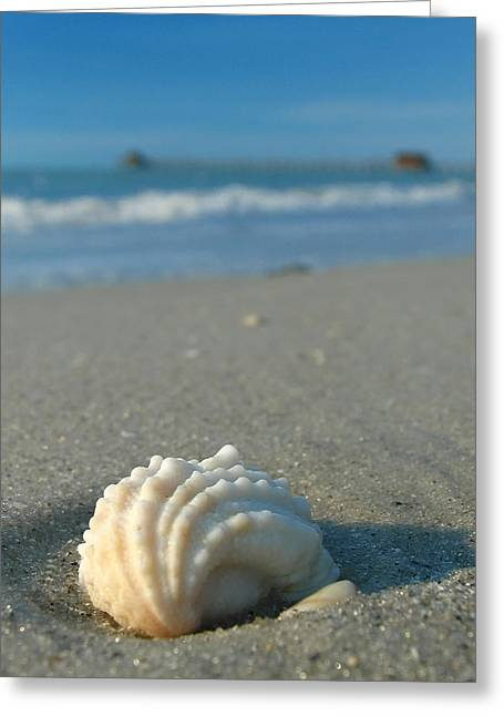 Conch Shell Greeting Card by Juergen Roth