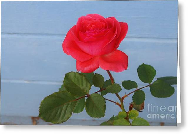 Concrete Rose Greeting Card by Angela J Wright