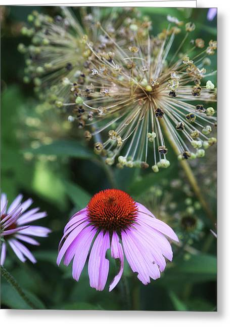 Cone Flower In Dow Gardens Greeting Card by Mary Bedy