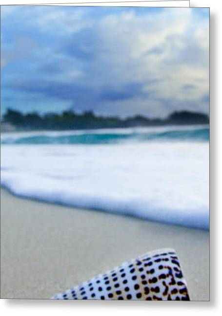 Cone Shell Foam  -  Part 2 Of 3 Greeting Card by Sean Davey