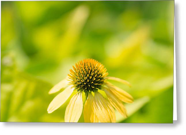 Coneflower Greeting Cards - Cone Squared Greeting Card by Rebecca Cozart