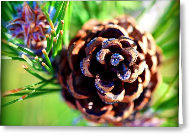 Pine Cones Greeting Cards - Coned Greeting Card by Susie Weaver