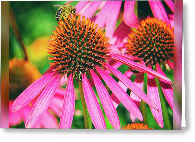 Coneflower Bee Greeting Card by Kasia Bitner