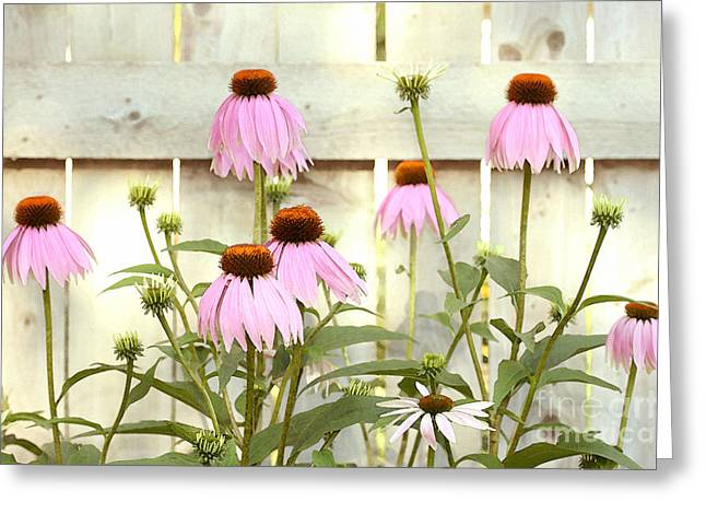 Steve Augustin Greeting Cards - Coneflower Patch Greeting Card by Steve Augustin