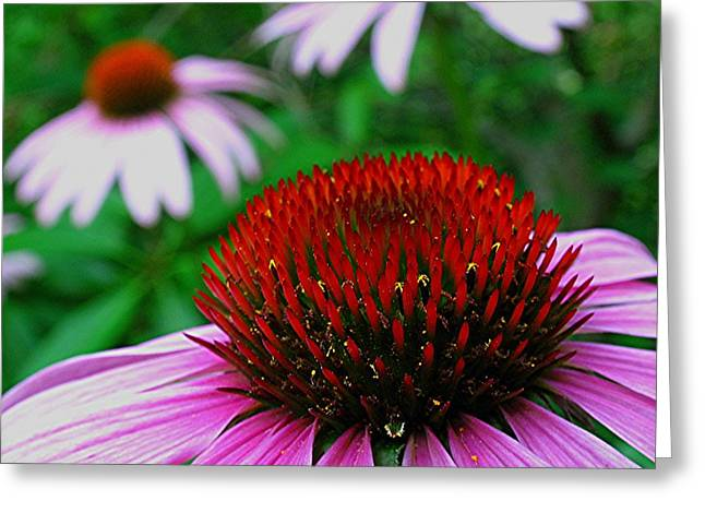 Coneflowers Greeting Card by Juergen Roth