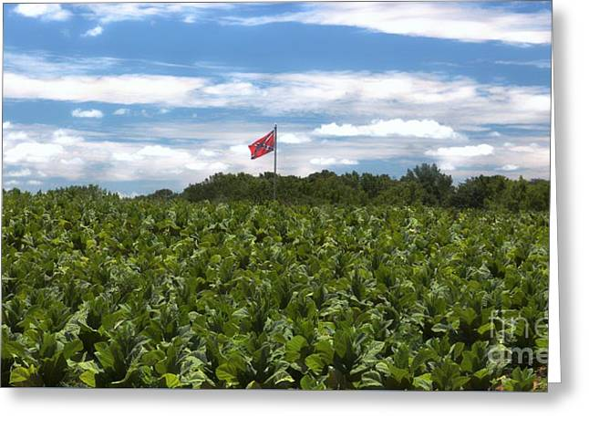 Confederate Flag Greeting Cards - Confederate Flag in Tobacco Field Greeting Card by Benanne Stiens