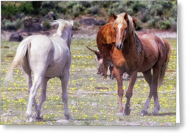 Confrontation Greeting Card by Belinda Greb