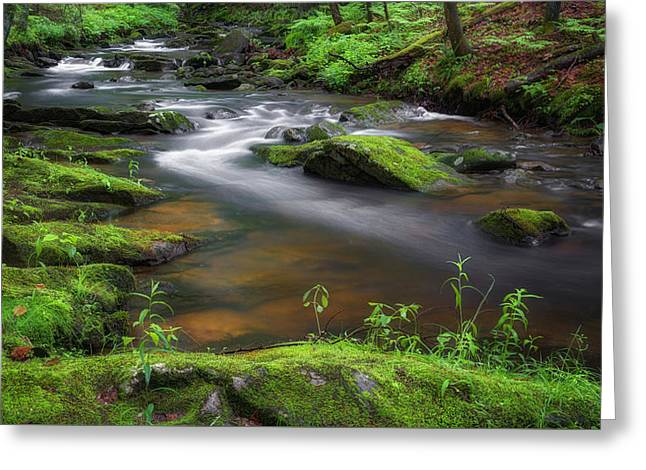 Falling Water Greeting Cards - Connecticut Flowing Spring Stream Greeting Card by Bill Wakeley
