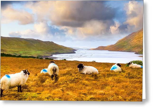 Winter Scenes Rural Scenes Greeting Cards - Connemara Sheep Grazing Over Killary Fjord Greeting Card by Mark E Tisdale