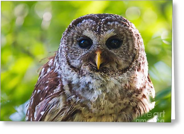 Observer Greeting Cards - Contemplating Her Next Meal Greeting Card by Gary Holmes