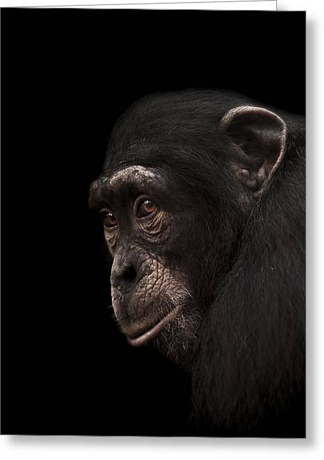 Primate Greeting Cards - Contemplation Greeting Card by Paul Neville