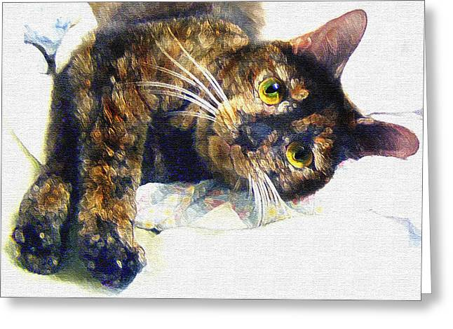 Tortie Greeting Cards - Contented Cat Greeting Card by Jane Schnetlage