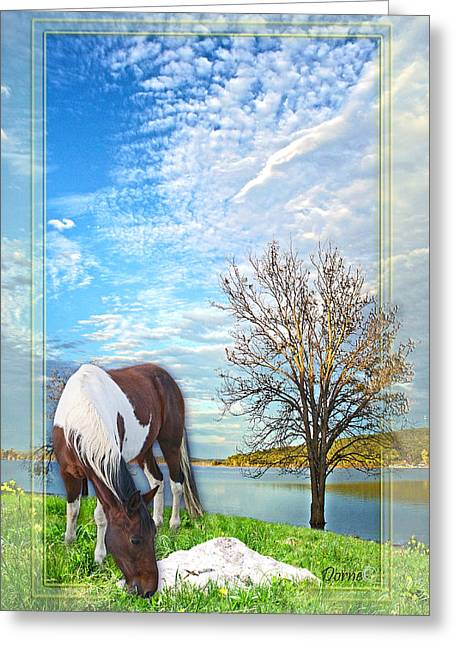 Sea Horse Greeting Cards - Contentment Greeting Card by Dorne Ann