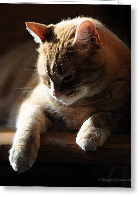 Tom Cat Greeting Cards - Contentment Greeting Card by Renee Forth-Fukumoto