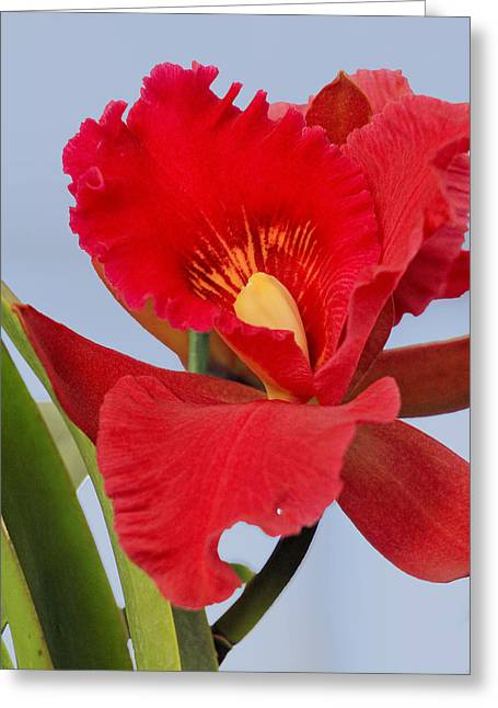 Contrast  Greeting Card by Geraldine Scull