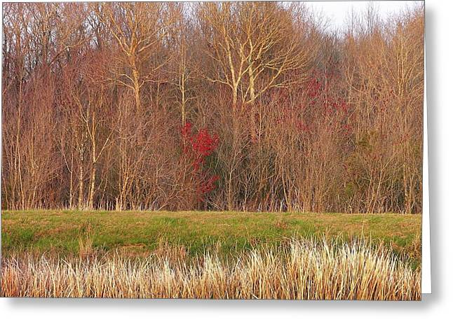 Al Powell Photography Usa Greeting Cards - Contrasting Colors Greeting Card by Al Powell Photography USA