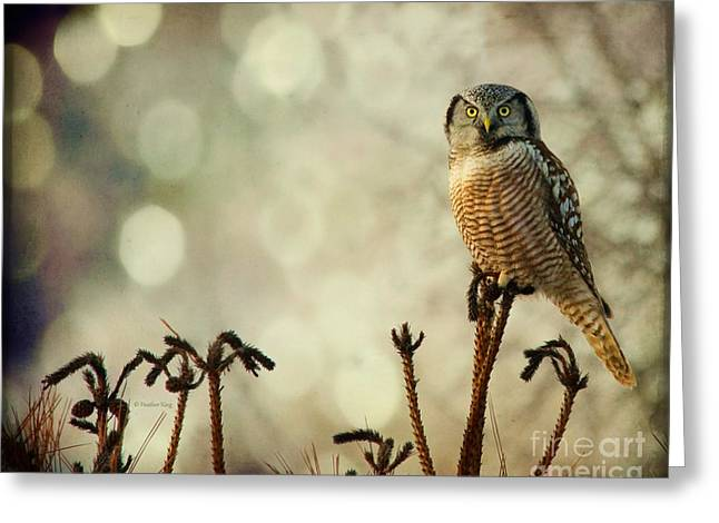Farmers Field Greeting Cards - Convenient Perch Greeting Card by Heather King