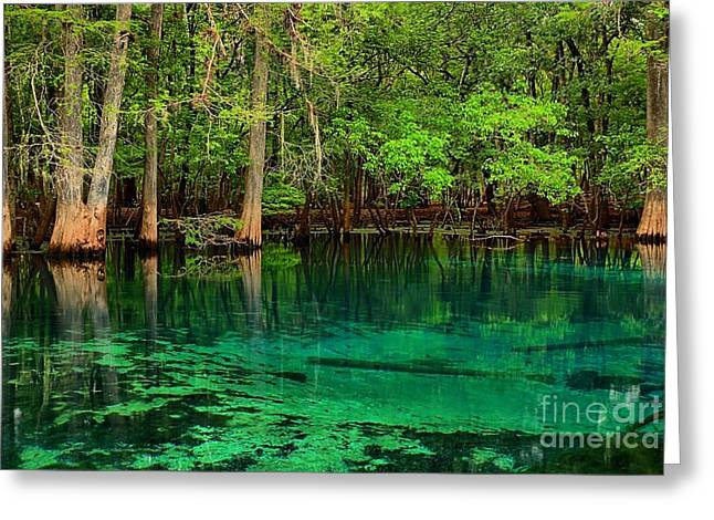 Manatee Springs Greeting Cards - Cool Blue Manatee Spring Waters Greeting Card by Adam Jewell