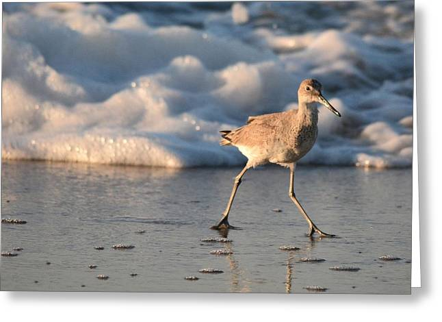 Sea Birds Greeting Cards - Cool Running Greeting Card by Earle Morrison