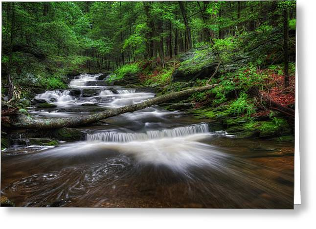 Woodland Scenes Greeting Cards - Cool Spring Stream Greeting Card by Bill Wakeley