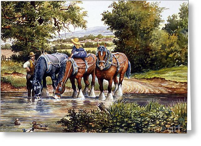 The Horse Greeting Cards - Cooling Off Greeting Card by Anthony Forster