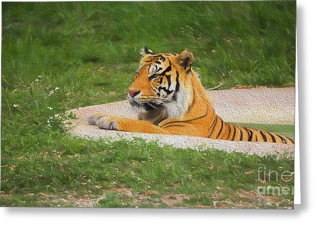 Wildcats Greeting Cards - Cooling Off Greeting Card by Judy Kay