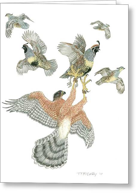 Flocks Of Birds Drawings Greeting Cards - Coopers Hawk and Gambels Quail Greeting Card by Tim McCarthy