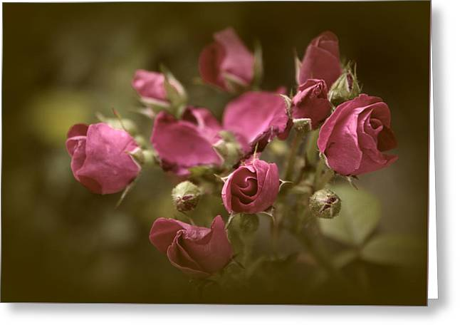 Copper Petals Greeting Card by Jessica Jenney