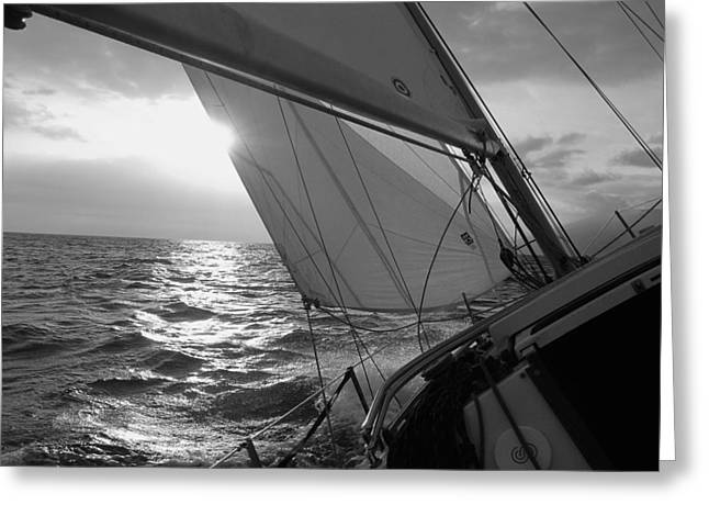 Yacht Greeting Cards - Coquette Sailing Greeting Card by Dustin K Ryan