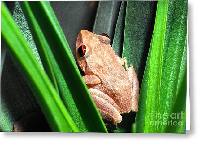 Bromeliad Photographs Greeting Cards - Coqui in Bromeliad Greeting Card by Thomas R Fletcher