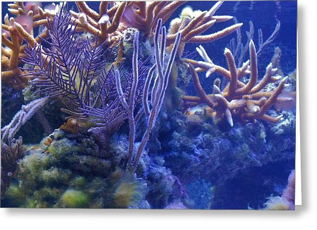 Snorkel Greeting Cards - Coral 2 Greeting Card by Todd and candice Dailey
