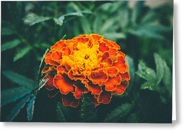 Photo Art Gallery Greeting Cards - Coral Greeting Card by George Fivaz