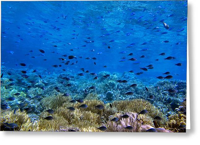 Underwater Photos Greeting Cards - Coral landscape Greeting Card by Sergey Lukashin
