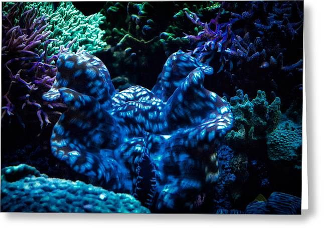 Snorkel Greeting Cards - Coral Greeting Card by Todd and candice Dailey
