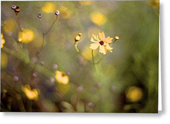 Florida Flower Greeting Cards - Coreopsis Greeting Card by William Wetmore