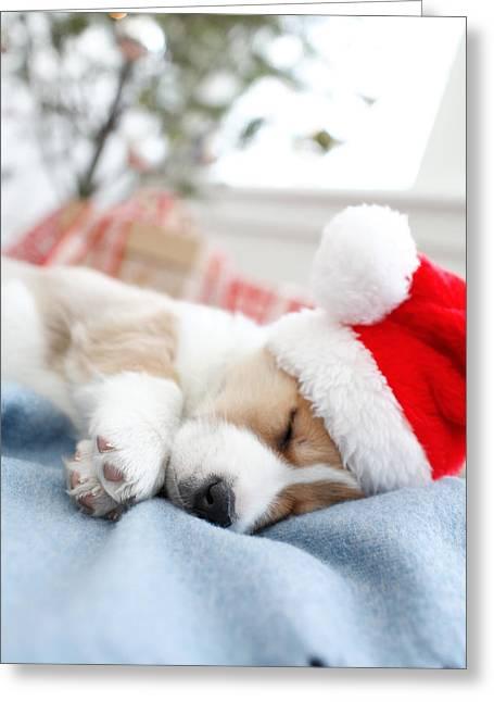 Santa Hat Greeting Cards - Corgi In Santa Hat Sleeping Greeting Card by Gillham Studios