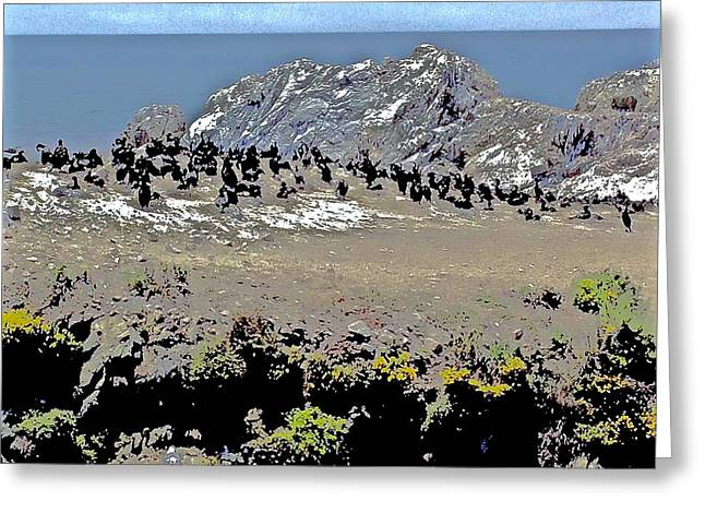 Point Lobos Greeting Cards - Cormorants Nesting Greeting Card by Scott L Holtslander