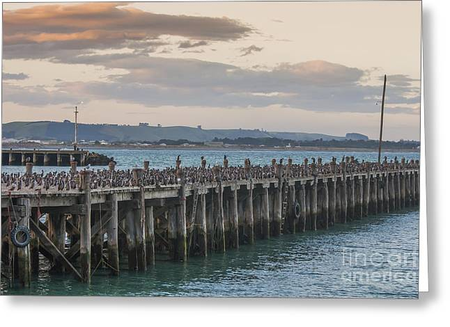 Cormorants On A Wooden Jetty Greeting Card by Patricia Hofmeester