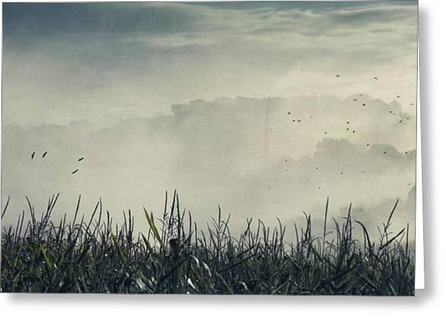 Deutschland Greeting Cards - Corn and Fog Greeting Card by Dirk Wuestenhagen
