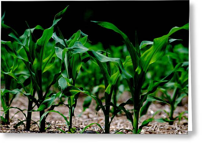 Vegetables Pastels Greeting Cards - Corn at night Greeting Card by Steavon Horne