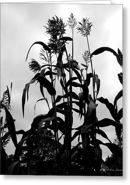 Black Berries Greeting Cards - Corn Plant  Greeting Card by Deborah  Crew-Johnson