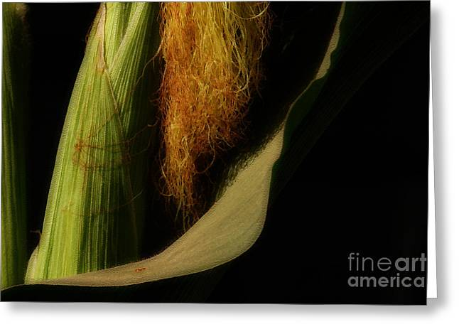 Corn Seeds Greeting Cards - Corn Silk Greeting Card by Linda Knorr Shafer