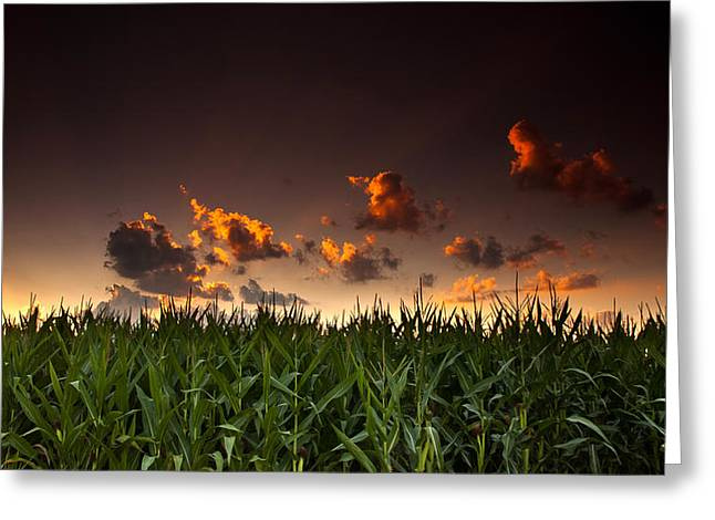 Corn Greeting Cards - Corn Sunset Greeting Card by Cale Best