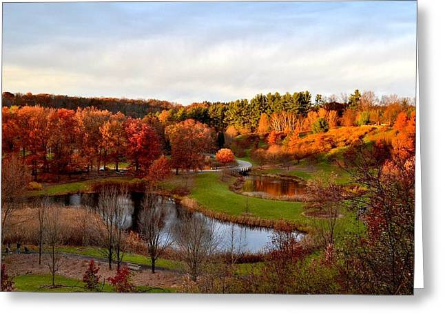 Fall Colors Greeting Cards - Cornell Plantations in the Setting Sun Greeting Card by Linda Wyatt