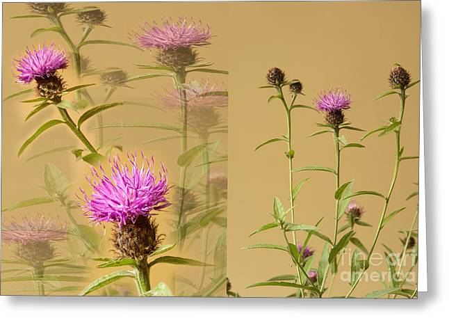 Cornflower Collage Greeting Card by Donald Davis