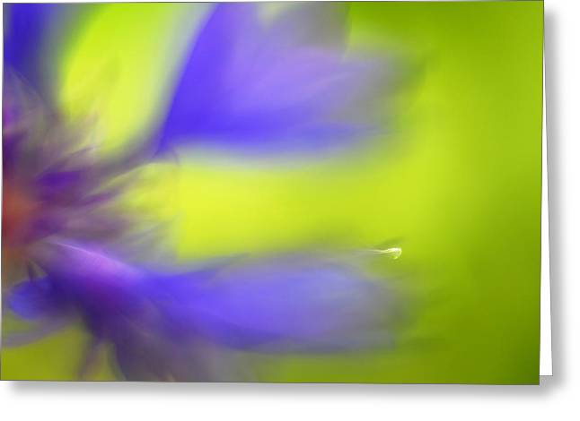 Close Up Photography Greeting Cards - Cornflower Greeting Card by Silke Magino